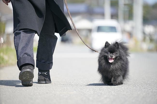 犬の散歩マナーあなたは大丈夫?わんちゃんと守りたいマナー一覧