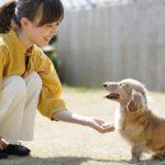 624犬にお手はしつけの入り口!覚えさせる簡単な教え方とコツ