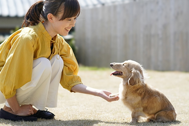 犬にお手はしつけの入り口!覚えさせる簡単な教え方とコツ