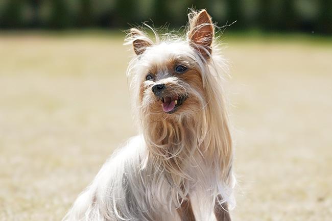 犬が吐くのはなぜ?知っておくべき嘔吐の種類と病気との関連性
