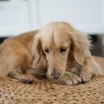 465犬のストレス発散・ストレス解消法をご紹介!ストレスフリーに!