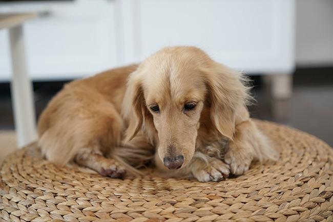 犬のストレス発散・ストレス解消法をご紹介!ストレスフリーに!