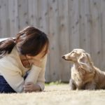 537愛犬の狂犬病対策、病院での注射は必要?知っておきたいアレコレ