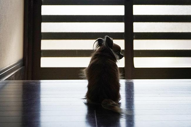 犬のお留守番のしつけは工夫次第!不安な時間を解消する7つのテクニックとは