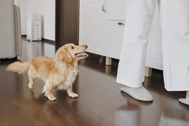 犬も大好き!ささみについて栄養素や簡単レシピをご紹介!