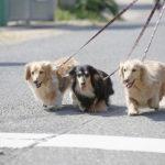 415散歩中に歩いてくれない!そんなときの犬の気持ちって?