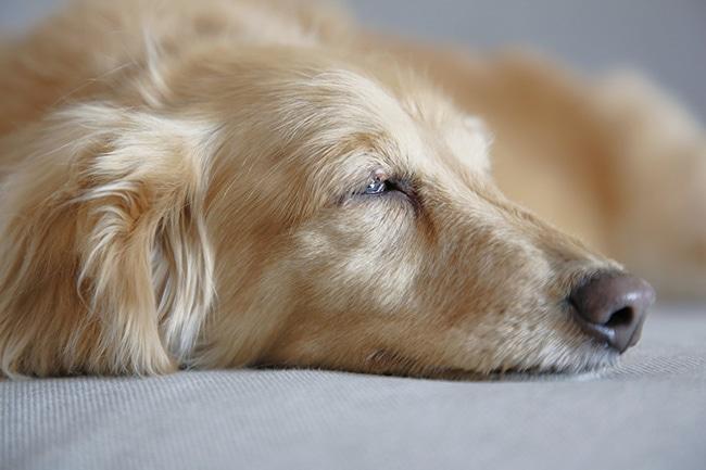 犬が下痢をしてしまったら?症状から考えられる病気や原因・対処法