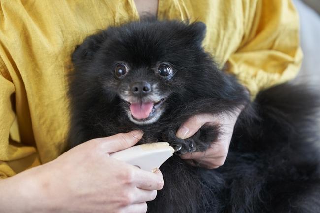犬への爪切り方法と気をつけるポイント・黒い爪と白い爪の注意点