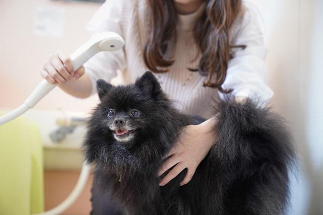 犬のシャンプー方法はとっても簡単!自宅でできるお風呂の入れ方