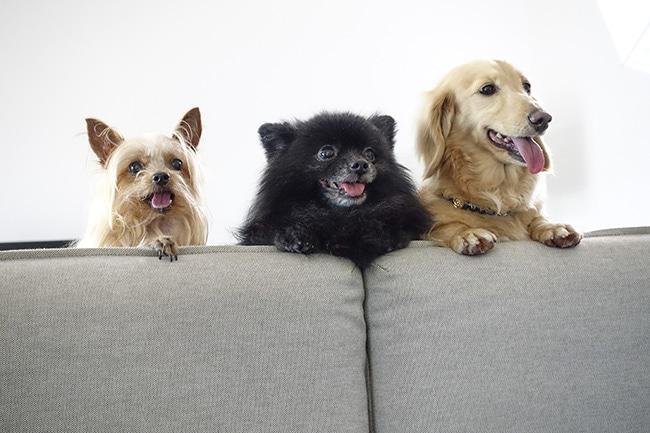 犬に「モリンガ」が健康にオススメ!その理由と効果・効能をご紹介