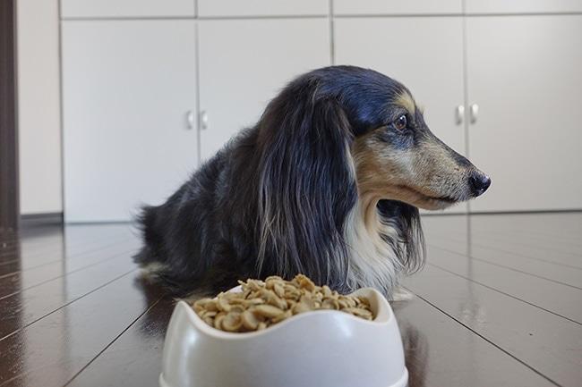 愛犬がドッグフードを食べないときに食べてもらう対処法とは?