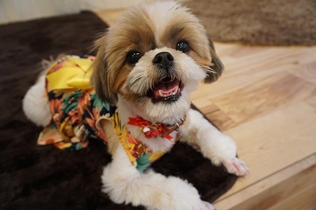 犬の服のサイズの寸法の正しい測り方