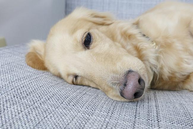 犬のストレスの原因を知ろう!見分け方と解消・対策法をご紹介
