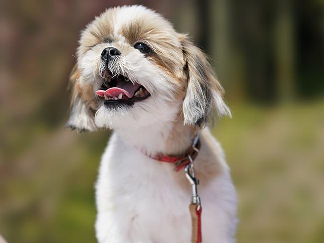 犬が喜ぶマッサージのツボを伝授!犬にも最高の癒しを