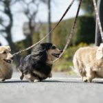 951初めての犬の散歩に!知っておきたい・抑えておきたいポイントをご紹介