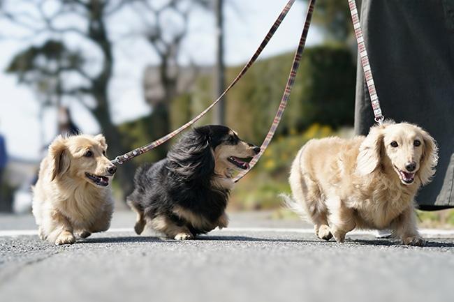 初めての犬の散歩に!知っておきたい・抑えておきたいポイントをご紹介
