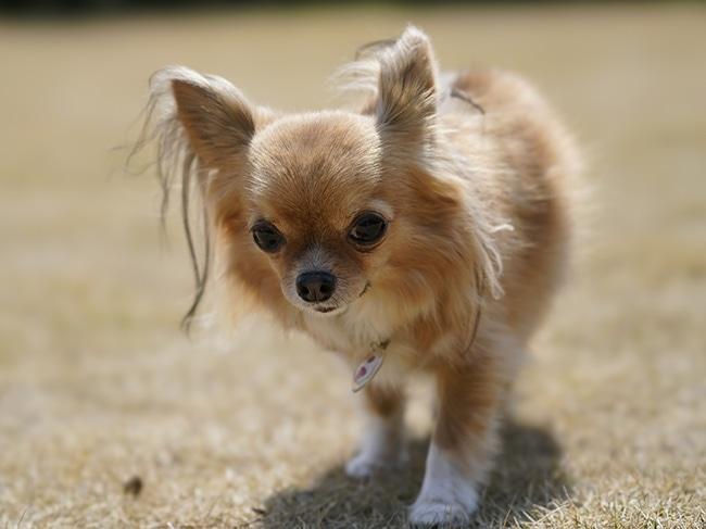 愛犬に靴を買いたい!まずはサイズの測り方を知ろう!