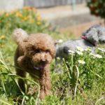 619犬のフィラリア予防の時期はいつごろ?知っておきたい投薬開始時期と対策