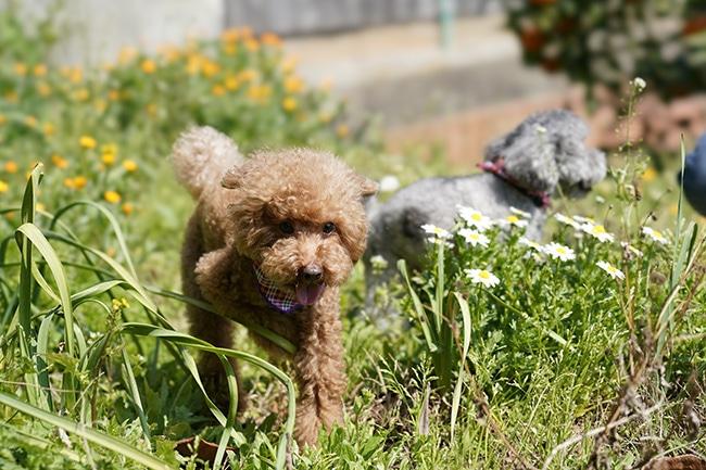 犬のフィラリア予防の時期はいつごろ?知っておきたい投薬開始時期と対策