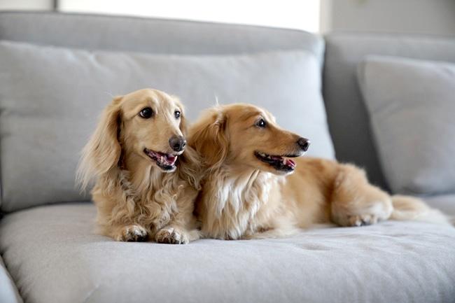 犬の口が臭い!原因を知って日常的に予防しましょう!