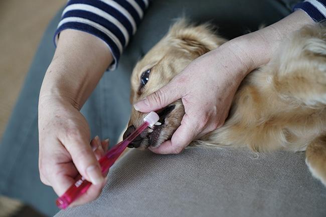 犬が歯磨きを嫌がる!歯ブラシ要らずのケア方法は?