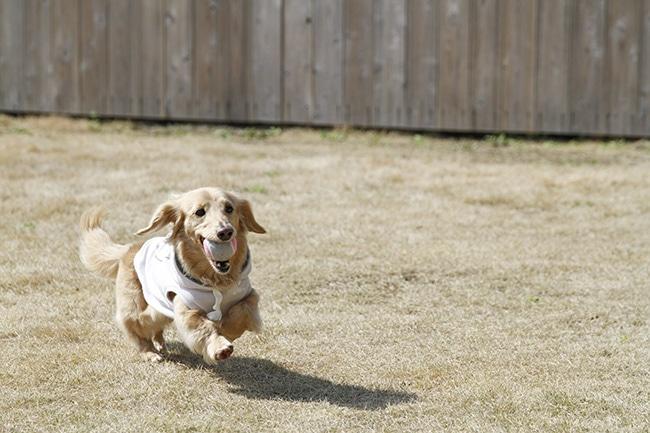 犬に持ってこいを覚えさせるためのしつけ方をご紹介!