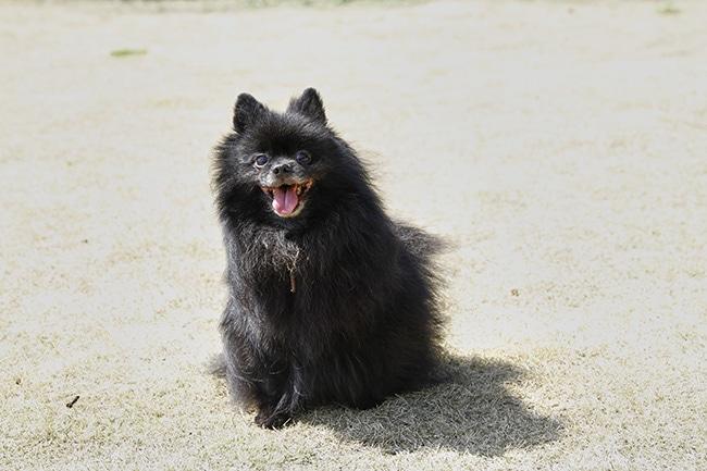 犬にも嬉しい乳酸菌!その驚きの効果と効能を詳しくご紹介