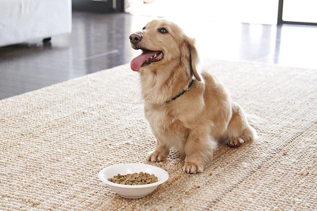 犬にさつまいもを与えたい理由。効果やレシピをご紹介!