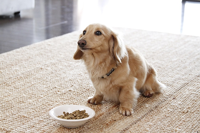 犬が食べるドライフードって?ドッグフードの違いとは
