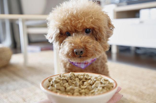 犬はドライフードが好き?ドッグフードの種類や食べさせ方をご紹介!