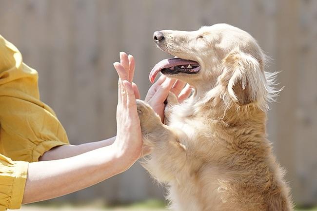 犬にハイタッチを覚えさせるには?失敗しない教え方とコツをご紹介!