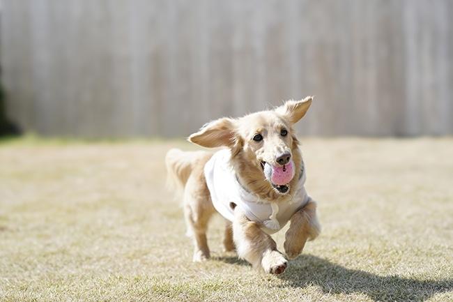 愛犬と一緒にボール遊びを楽しむコツをご紹介