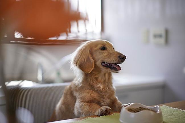 小型犬のためのドッグフードの選び方のコツをご紹介