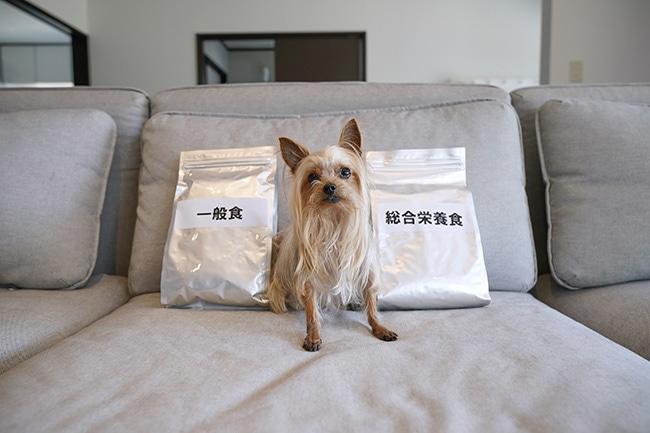 犬の総合栄養食って何?ドッグフードに違いはあるのかご説明!