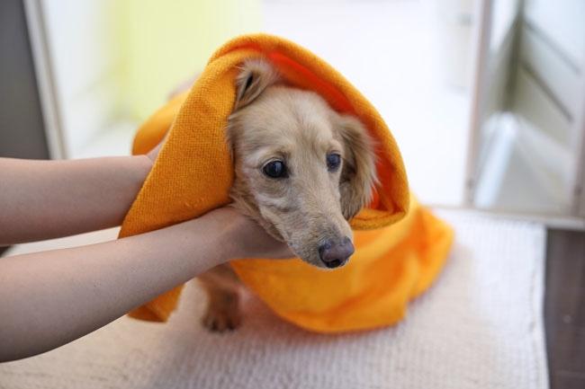 水嫌いな犬に飼い主様必見の水を好きになってもらう方法をご紹介