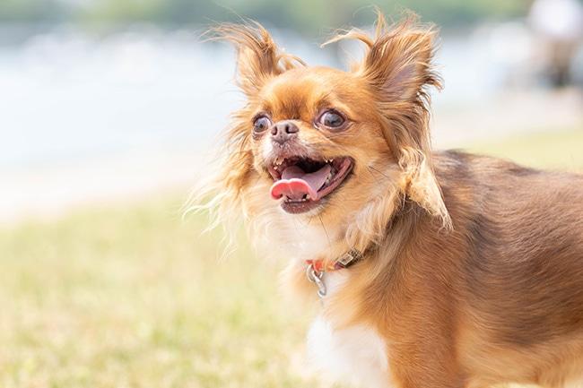 愛犬の歯周病対策は大丈夫?症状や予防策をご紹介!
