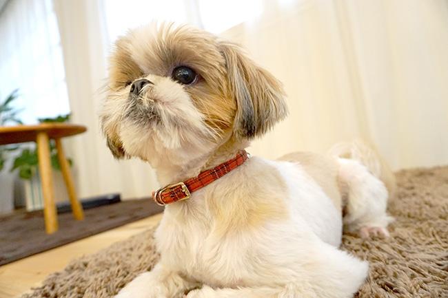 犬に伏せを覚えさせるしつけ方法と意味・簡単なコツをご紹介!