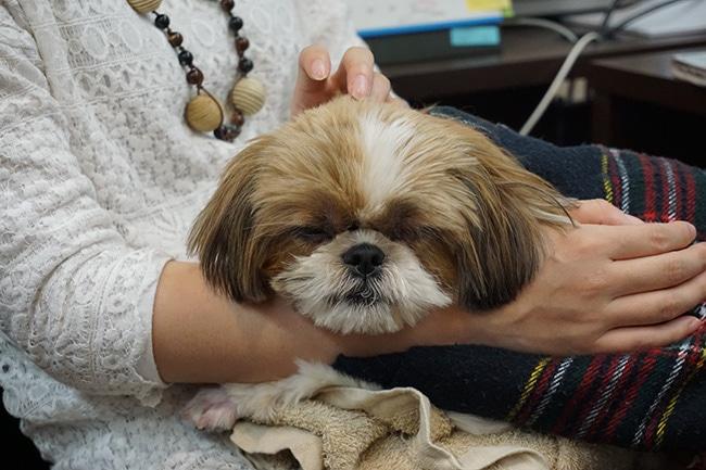 犬の顔マッサージ方法!気持ちよくリラックスしてもらうためのツボをご紹介