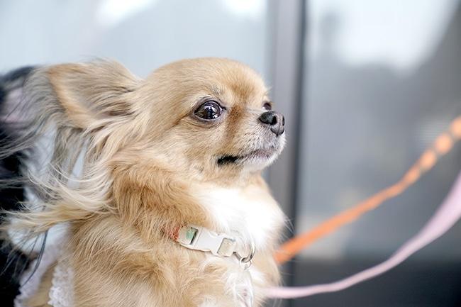 犬にさくらんぼを与えるのは大丈夫?与え方や効果についてご紹介
