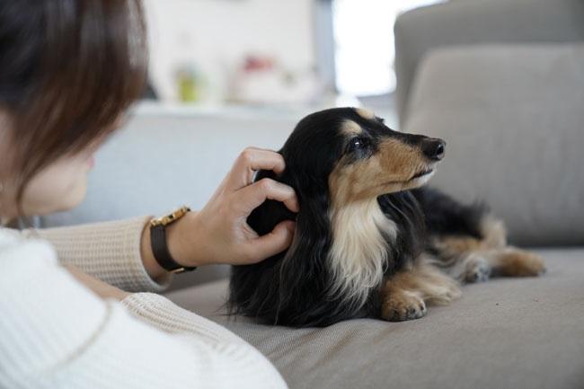 犬のブラッシングの必要性とやり方を知り楽しい時間を共有しましょう