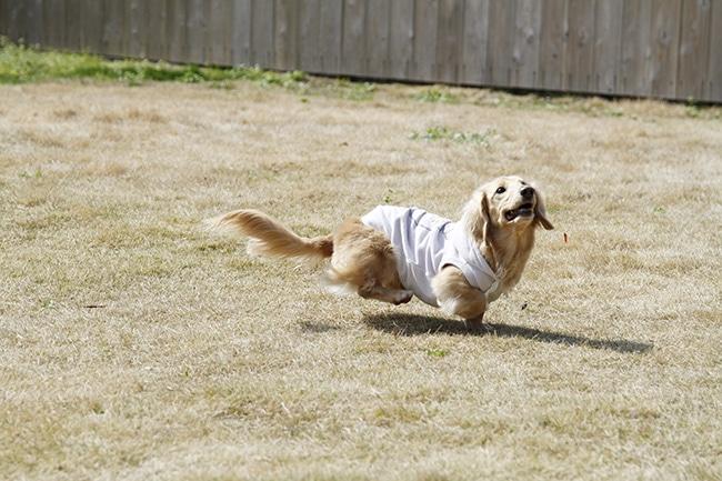 犬とフリスビーを楽しむための教え方をご紹介!