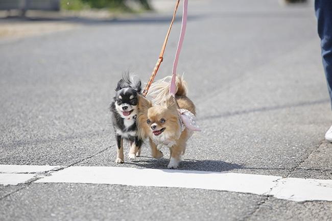 夏の犬のお散歩はどうしたらよいの?気になる夏場のお散歩についてご紹介