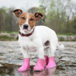 1903犬用の長靴で雨の日のお散歩嫌いを克服しましょう!