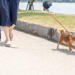 2084愛犬のリードの選び方に悩んでる方へ。選び方のポイントをご紹介!