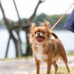 2065犬の適正体型を知り、毎日の健康を保ちましょう!