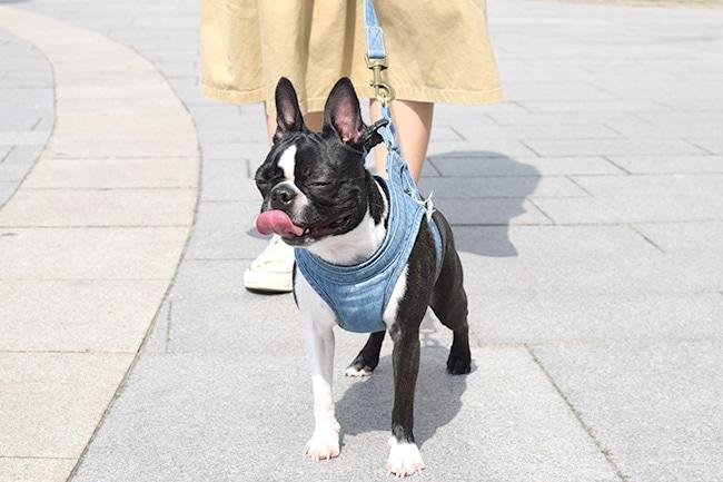 犬のお散歩に必要なグッズをご紹介!マナーを守って楽しいお散歩をしましょう!