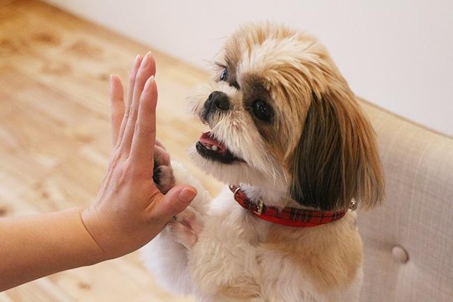 梅雨の時期、愛犬の様子を気に掛けてあげて!
