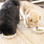 2499犬の食事の回数は何回が適正なの?