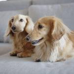 2170健康診断を受けて愛犬の健康状態をチェックしよう!