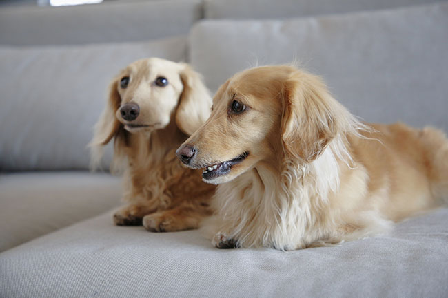 健康診断を受けて愛犬の健康状態をチェックしよう!